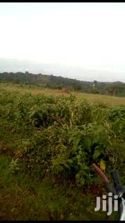 🇺🇬MITYANA ROAD KIKONGE: 67 Acres (Sold Together) @ 7m/Acre🇺🇬 | Land & Plots For Sale for sale in Central Region, Wakiso