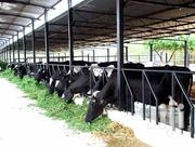 Best Cow Sheds Ever! | Other Repair & Constraction Items for sale in Central Region, Kampala