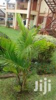 2 Bdrms Furnished Apartment for Rent in Ntinda   Houses & Apartments For Rent for sale in Kampala, Central Region, Uganda