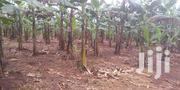 *13 Acres Of An Already Established Farm For Sale X | Land & Plots For Sale for sale in Central Region, Kampala