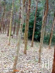 3 Acres of Land With Eucalyptus Trees for Sale | Land & Plots For Sale for sale in Central Region, Masaka