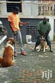 Dog/Canine Training | Pet Services for sale in Central Region, Kampala