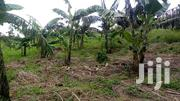 20acres for Sale in Rwibale Kyenjojo Asking 3.9m Per Acre With Title | Land & Plots For Sale for sale in Western Region, Kyenjojo