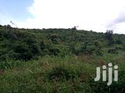 Mile Land for Sale at Kikyusa Luwero District | Land & Plots For Sale for sale in Central Region, Kampala