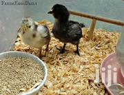 Farm Poultry | Livestock & Poultry for sale in Central Region, Kampala