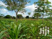 10 Acres of Land Sale Each at 15m in Kibibi Butambala With Atitle | Land & Plots For Sale for sale in Central Region, Kampala