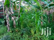 Plot of Land for Sale 100*50 With Ready Title Before Wobulenzi Town | Land & Plots For Sale for sale in Central Region, Wakiso