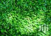 Artificial Grass Carpet | Garden for sale in Central Region, Kampala