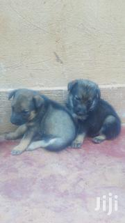 Baby Female Mixed Breed Labrador Retriever | Dogs & Puppies for sale in Central Region, Wakiso