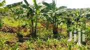 Namugongo Land For Sale 15 Decimals | Land & Plots For Sale for sale in Central Region, Kampala