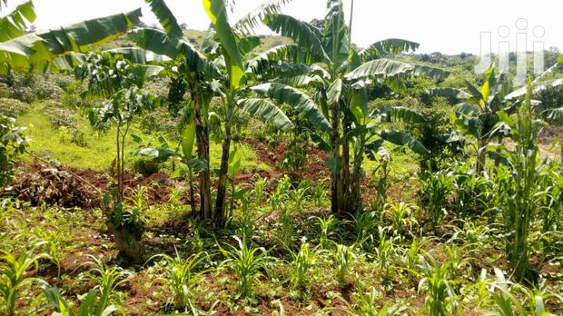 Namugongo Land For Sale 15 Decimals