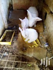 Swiss Breed Rabbits | Other Animals for sale in Central Region, Kampala