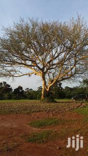 250 Acres of Land for Sale in Zirobwe 56km From Kampala City. | Land & Plots For Sale for sale in Central Region, Luweero