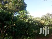 Onr Acre of Land on Quick Sale in Luweero District | Land & Plots For Sale for sale in Central Region, Kampala