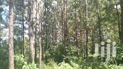 Kakiri  (Matuga-Kirolo  One Acre With Full of Pine Trees Sale 25m Ugx | Land & Plots For Sale for sale in Central Region, Kampala