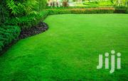 Lawn Care, Grass, Bush, Brush Cutting, Trimming Services   Landscaping & Gardening Services for sale in Central Region, Kampala