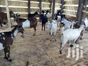 Another Stock Is Available | Other Animals for sale in Central Region, Kampala