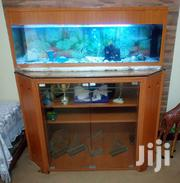 Fish Acquarium | Fish for sale in Central Region, Kampala