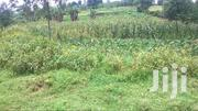 7 Acres Of Fertile Land For Sale In Bwanika, Fort Portal   Land & Plots For Sale for sale in Western Region, Kabalore