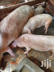 Pigs | Livestock & Poultry for sale in Eastern Region, Jinja