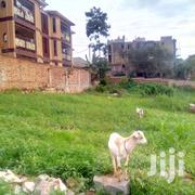 In Kyanja Centre 21 Decimals For Sale | Land & Plots For Sale for sale in Central Region, Kampala