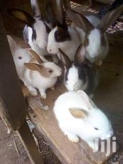 Rabbit For Sell | Other Animals for sale in Central Region, Mukono