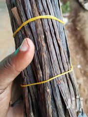 Vanilla Planifolia | Meals & Drinks for sale in Central Region, Kampala