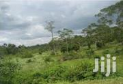 Land For Sale ,7 Square Miles In Mityana Myazi ,Each Acre | Land & Plots For Sale for sale in Central Region, Masaka
