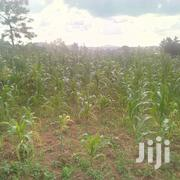 One On Sale Located At Matugga Along Bombo Rd 300meters Off Main Rd | Land & Plots For Sale for sale in Central Region, Wakiso