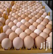 Broilers Ferterlized Eggs | Livestock & Poultry for sale in Central Region, Kampala