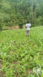 Mubende Agricultural and Commercial Land | Land & Plots For Sale for sale in Central Region, Mubende