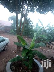 Plot in Bulenga | Land & Plots For Sale for sale in Central Region, Kampala