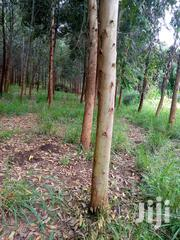 35 Acres Of Eucalyptus Trees On Quick Sale | Land & Plots For Sale for sale in Central Region, Kiboga