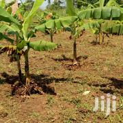 Plantation 50*100 | Land & Plots For Sale for sale in Central Region, Wakiso