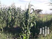 Farm Land in Kayunga for Sale | Land & Plots For Sale for sale in Central Region, Kayunga