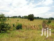 14acres At Wakisi Buikwe At Ugx58m Per Acre Touching River Nile | Land & Plots For Sale for sale in Eastern Region, Jinja