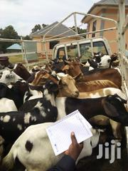 Christmas Offer Already In The Stock | Other Animals for sale in Central Region, Kampala