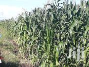 28 Acres Located in Busunju Hoima Road | Land & Plots For Sale for sale in Central Region, Wakiso