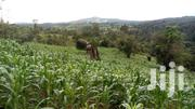 15acres Of Land For Sale In Zirobwe Kikyusa | Land & Plots For Sale for sale in Central Region, Luweero