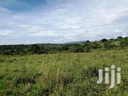 1.Acres And 25decimals In 3km From Zirobwe Town | Land & Plots For Sale for sale in Central Region, Wakiso