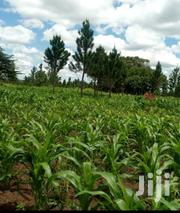 8 Acres In Mitala Maria Buwungu Just 7km From Masaka Road In Buwama | Land & Plots For Sale for sale in Central Region, Mpigi