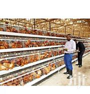 Staunch Chicken Cages 3 Layer | Automotive Services for sale in Central Region, Kampala