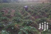 Potato Plantation | Land & Plots for Rent for sale in Central Region, Luweero