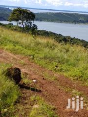 15 Acres Mailo Land 60M Each. Kalangala Ssese Island for Sale | Land & Plots For Sale for sale in Central Region, Kampala