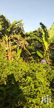 40acres of Farm Land for Sale in Kiyusa Buzibwera 4m Per Acre | Land & Plots For Sale for sale in Central Region, Luweero
