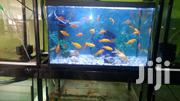 Well Set Complete Aquarium | Fish for sale in Central Region, Kampala