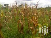 A Good Land With 400 Acres On Sale Kayunga-nakyesa Each Is At 3m | Land & Plots For Sale for sale in Western Region, Kisoro