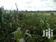 3 Square Mailos Of Land For Sale | Land & Plots For Sale for sale in Western Region, Hoima