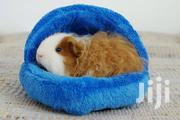 Guinea Pigs For Sale | Other Animals for sale in Central Region, Kampala