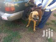 Specialized Veterinary Services For Dogs | Pet Services for sale in Central Region, Kampala